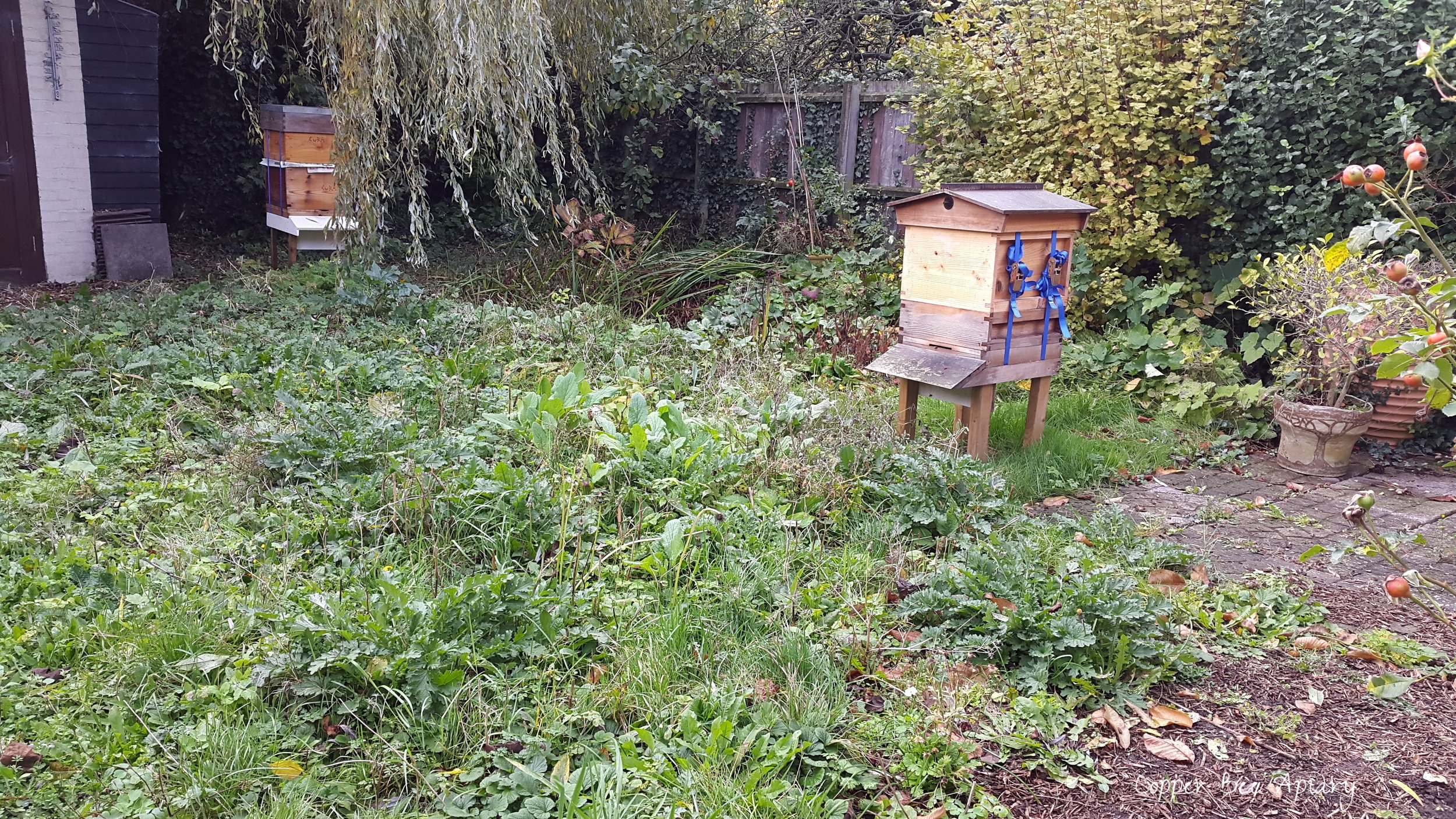 Last look at the apiary