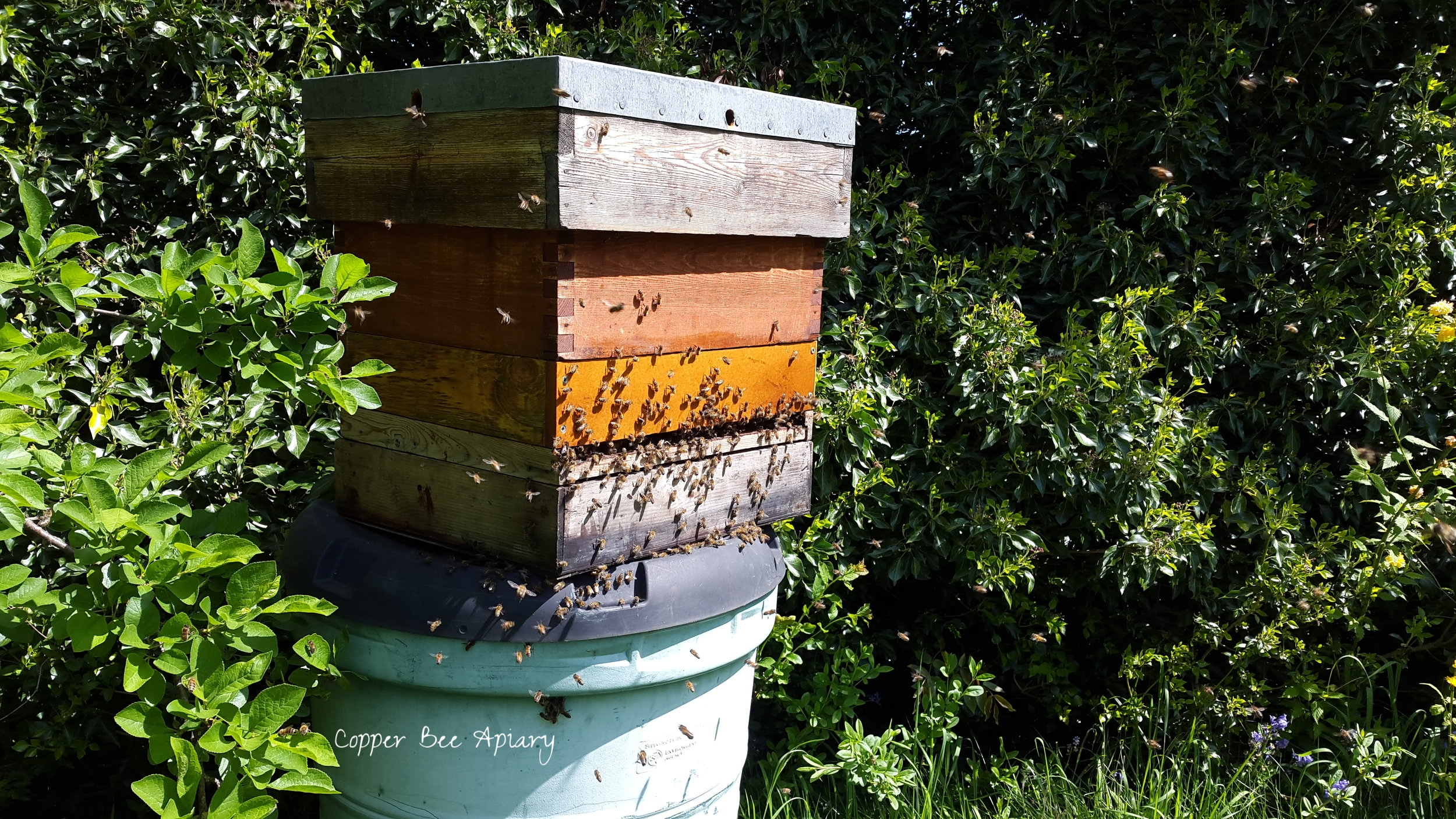 12:05 The bees are mostly in