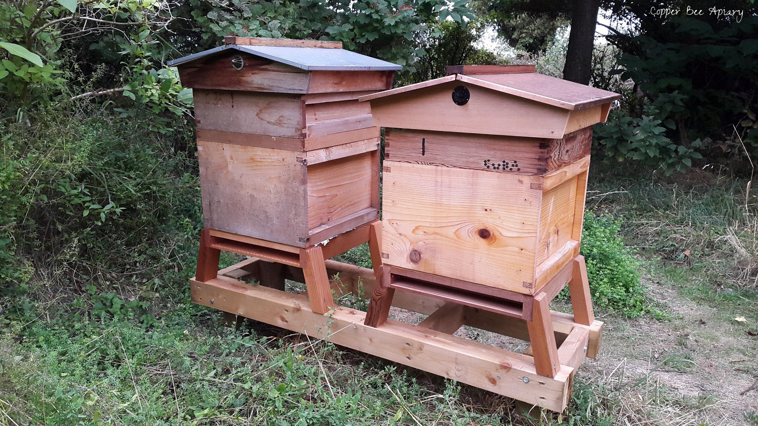 Queen Romaine hive (left); Queen Storm hive (right)