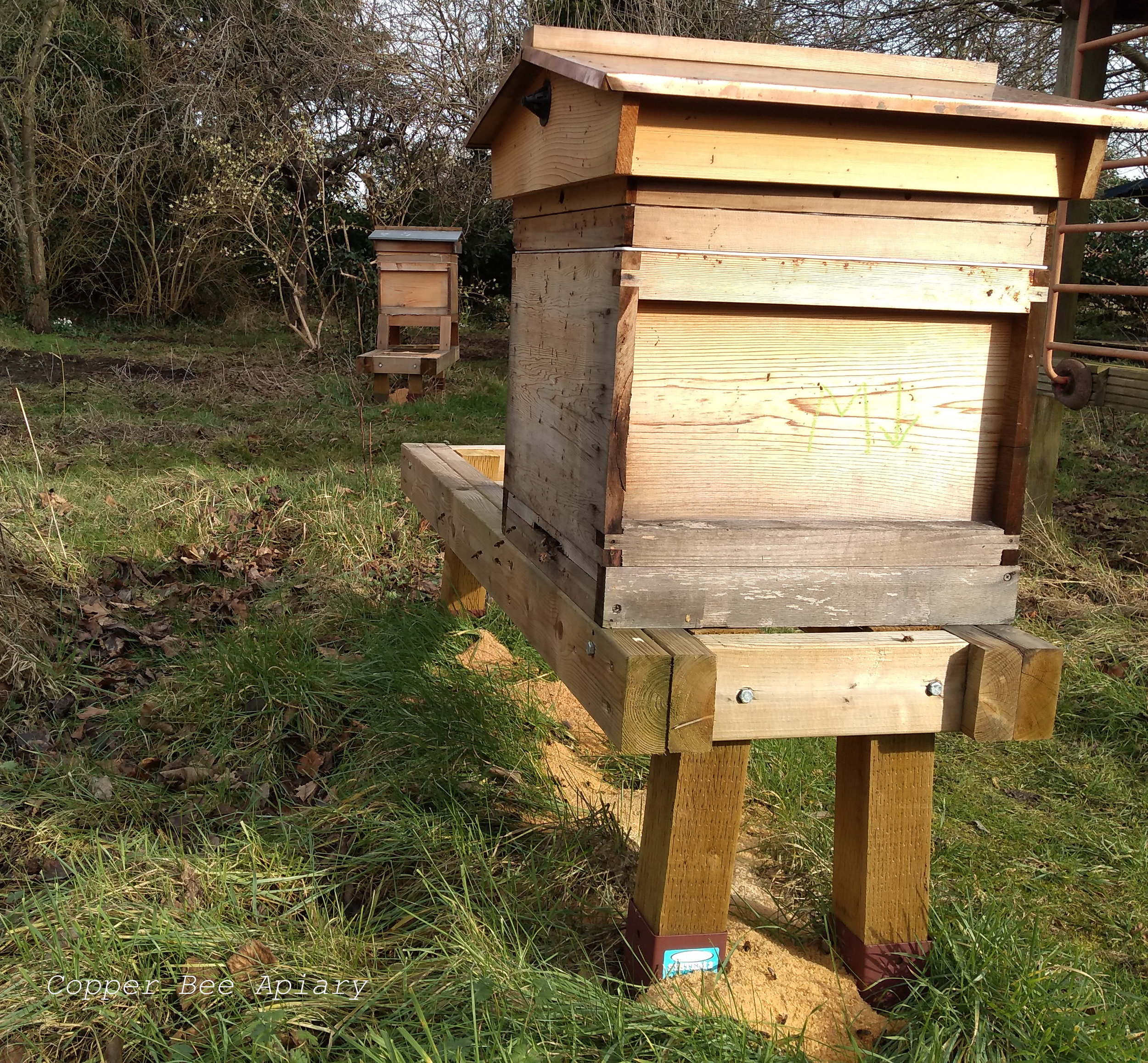 I put sawdust under the hive stands to suppress the growth of the grass there.