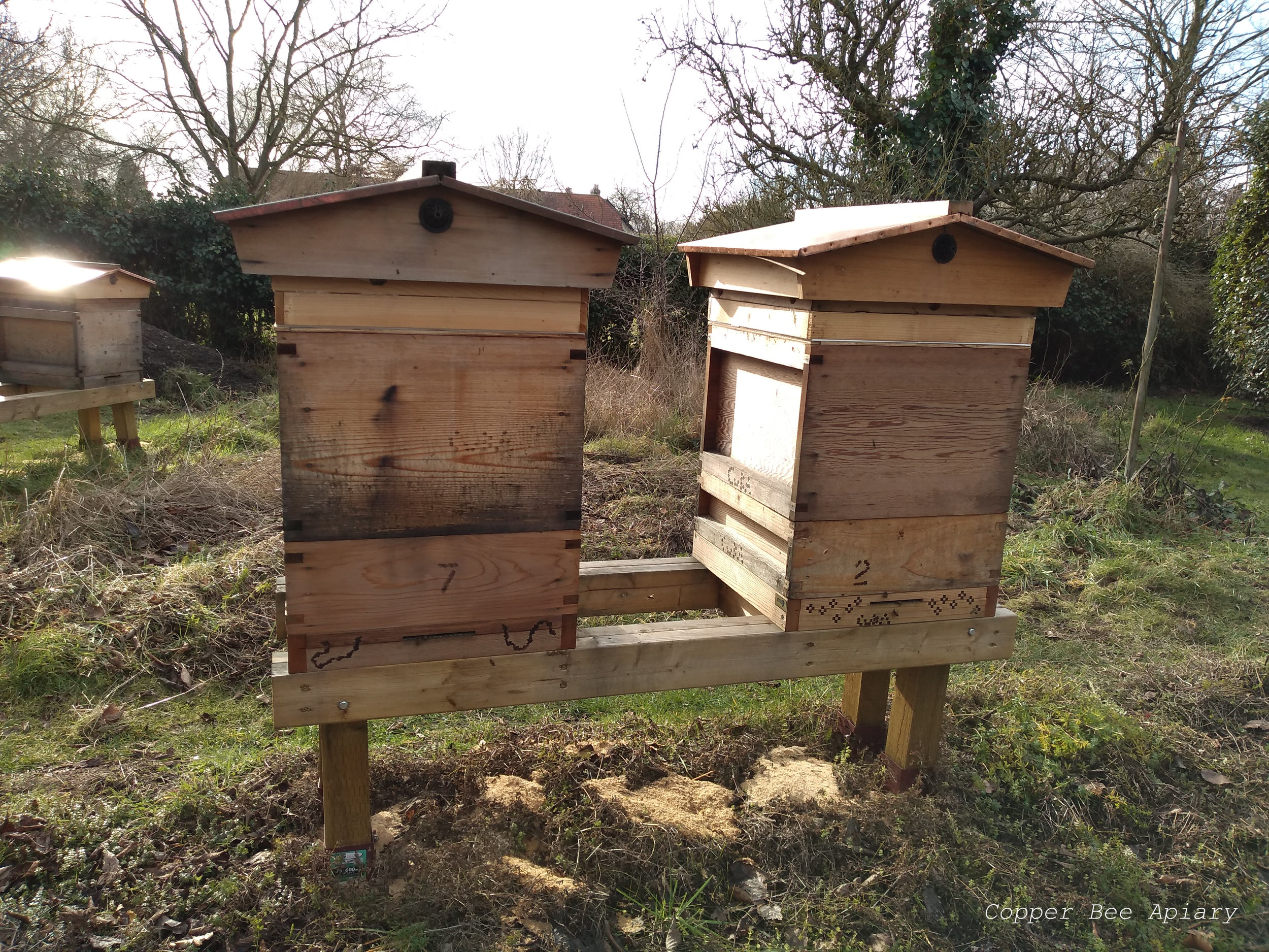 Queen Peony's hive (left) and Queen Ottilie's hive (right), with Queen Mab's hive in the background