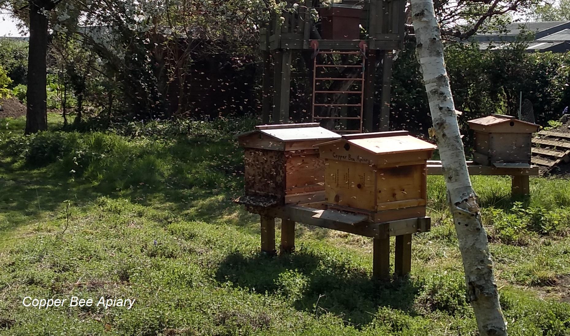Queen Peony's bees