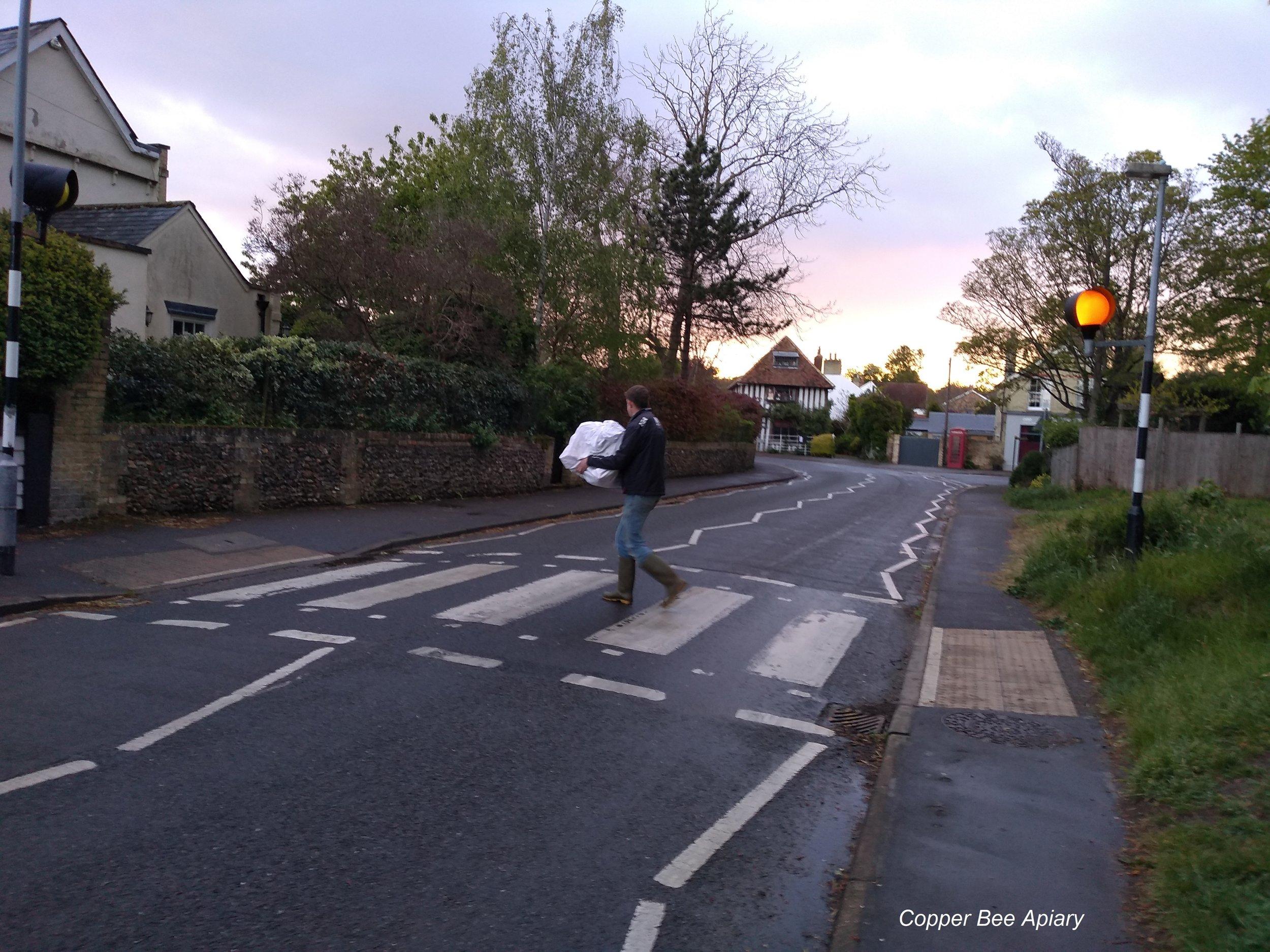 Bees crossing