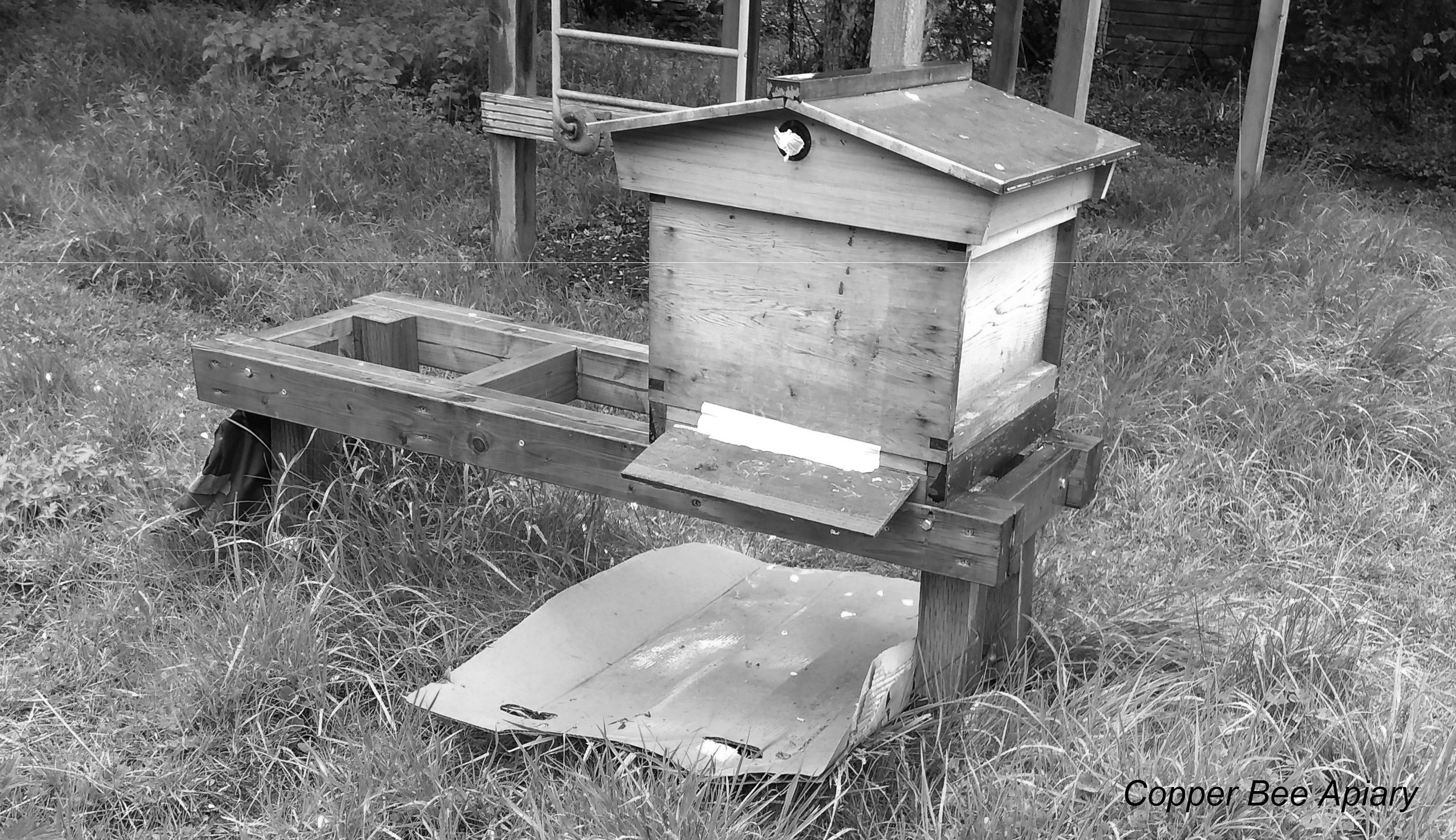 8 May 2019. The next morning. A quiet hive in the rain.
