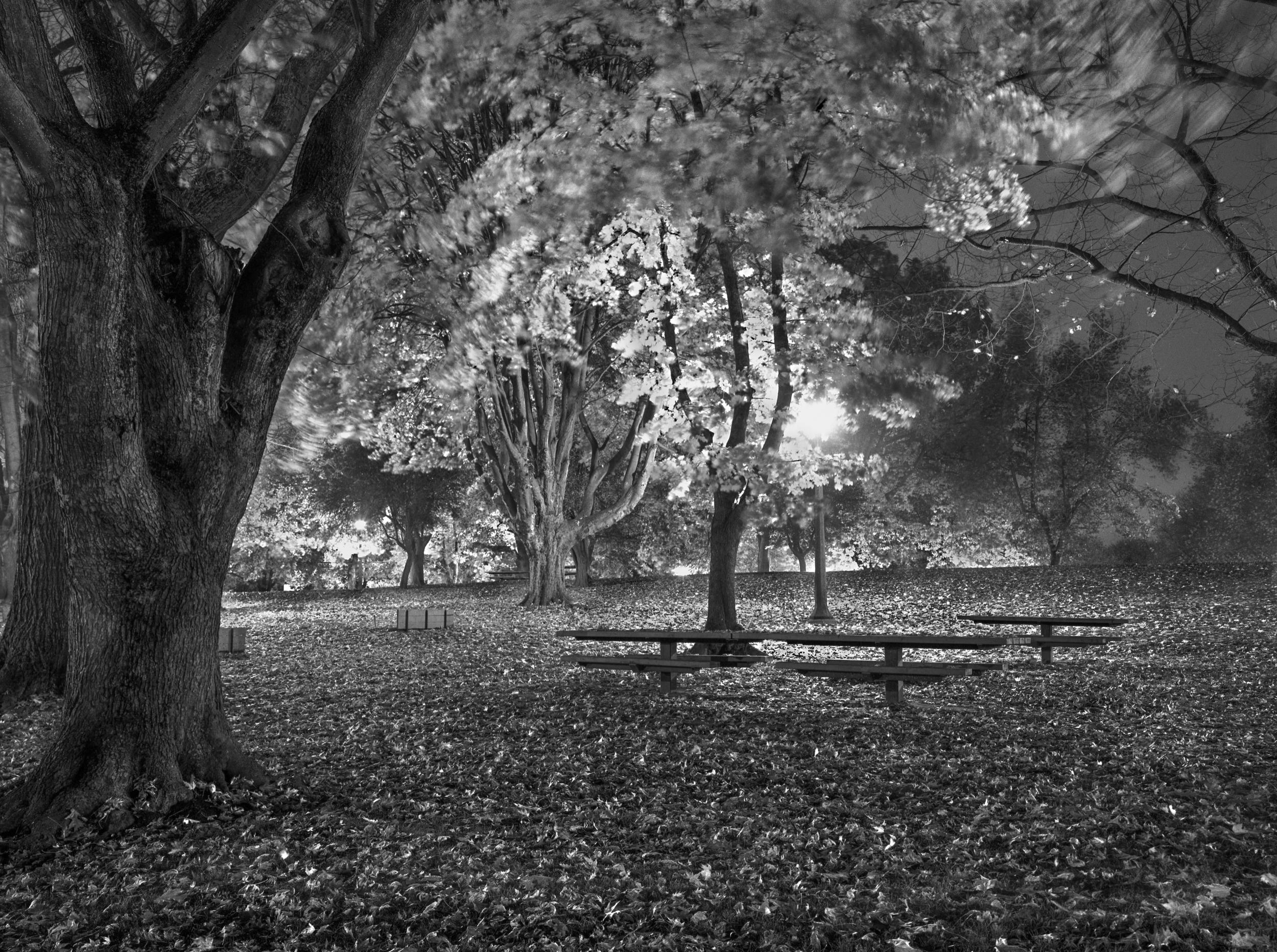 Irving Park Picnic Tables  Portland, Oregon