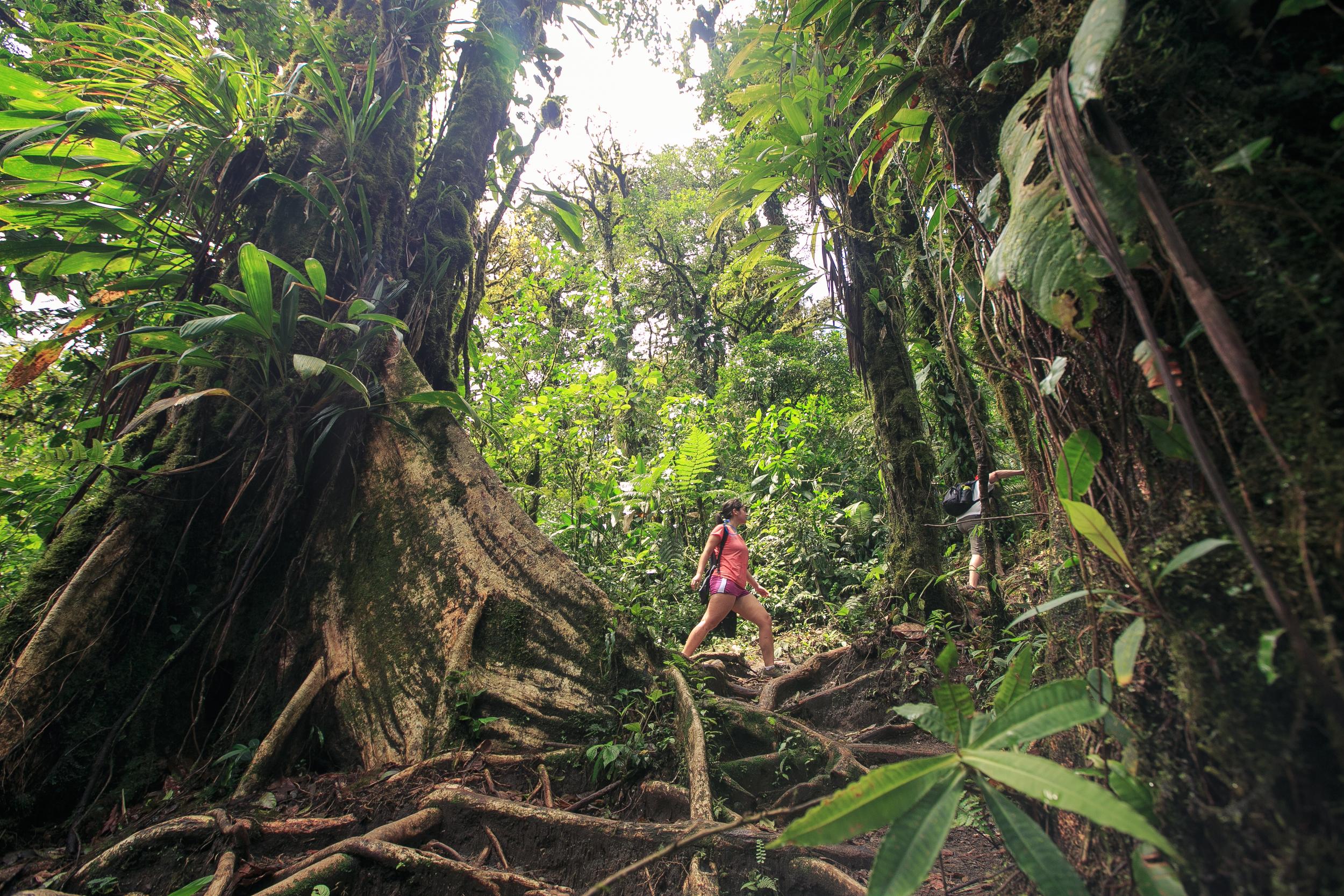 Costa Rica_Cerro Chato_hike_rainforest_SmartWool