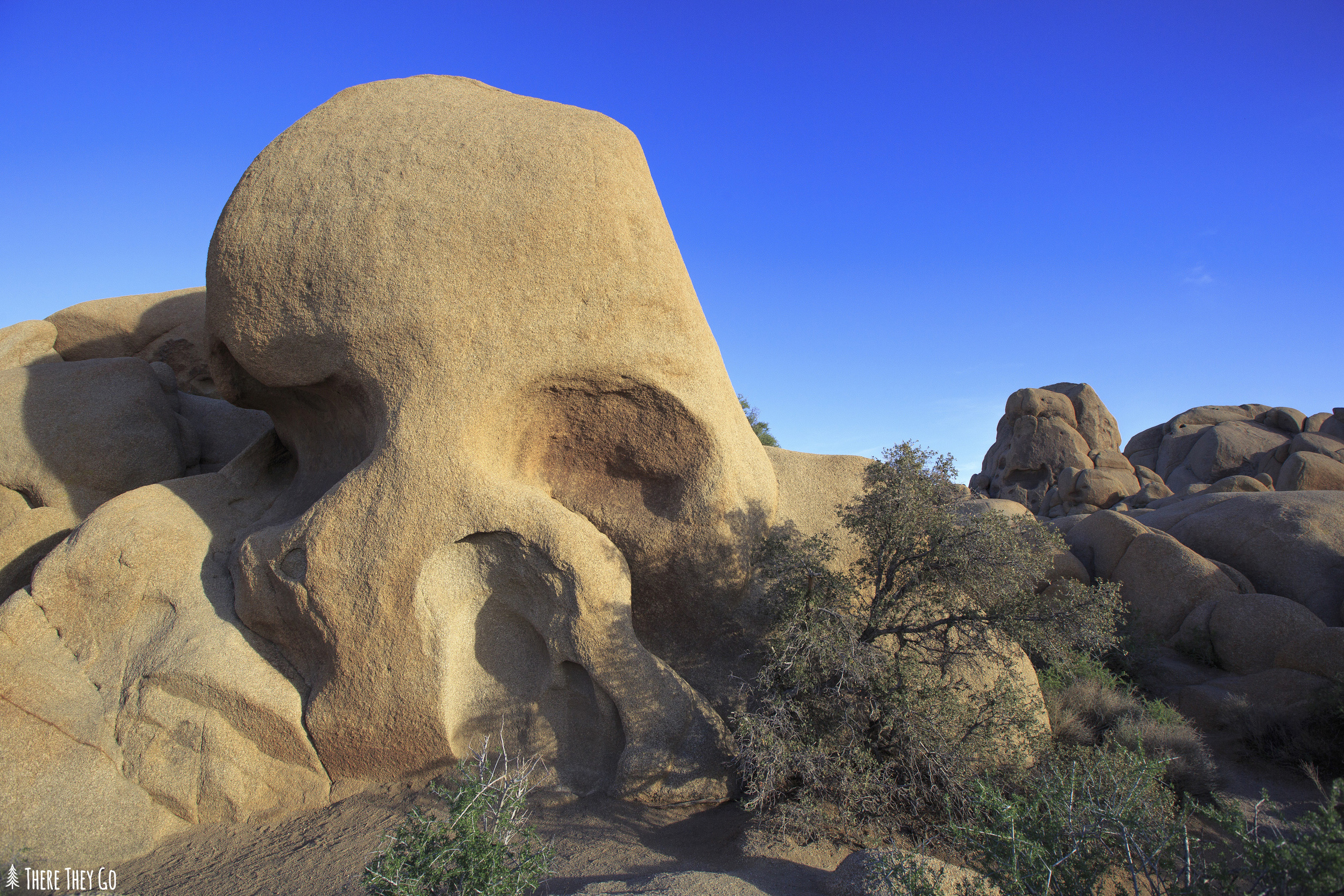 Skull rock, a popular destination in the park is located along the main east-west park road.  Its clearly visible from the road with posted signs and more than likely tourists packed along the side of the street.  Photo tip: Waiting until about 1 1/2 hours before sunset offers a very soft, warm light hitting the rock.