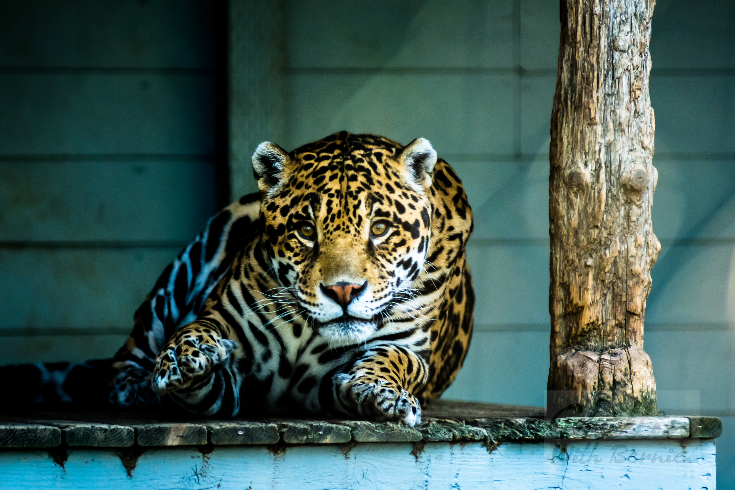 Zoo-Day (17 of 35).jpg