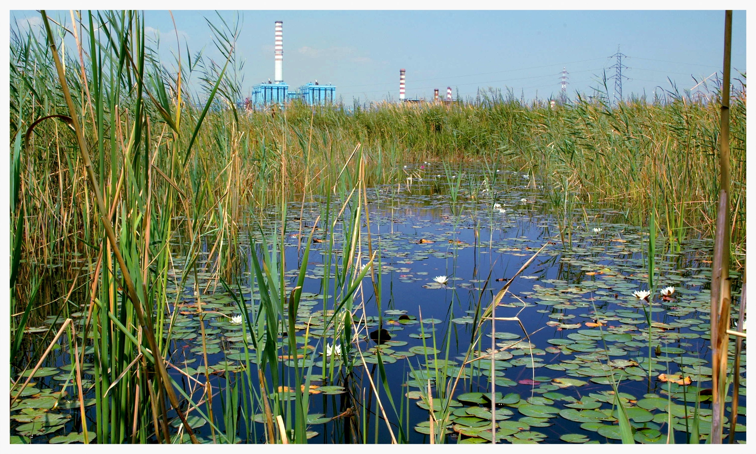FlowWest's experience with constructed wetlands for mitigation, habitat creation, and water pollution control spans over 15 years. We've designed systems up to 250 acres in size on three continents. We are experts in development, design, and implementation of wetland and microbial systems for water pollution control in stormwater, wastewater, agricultural, mining, and industrial sectors.