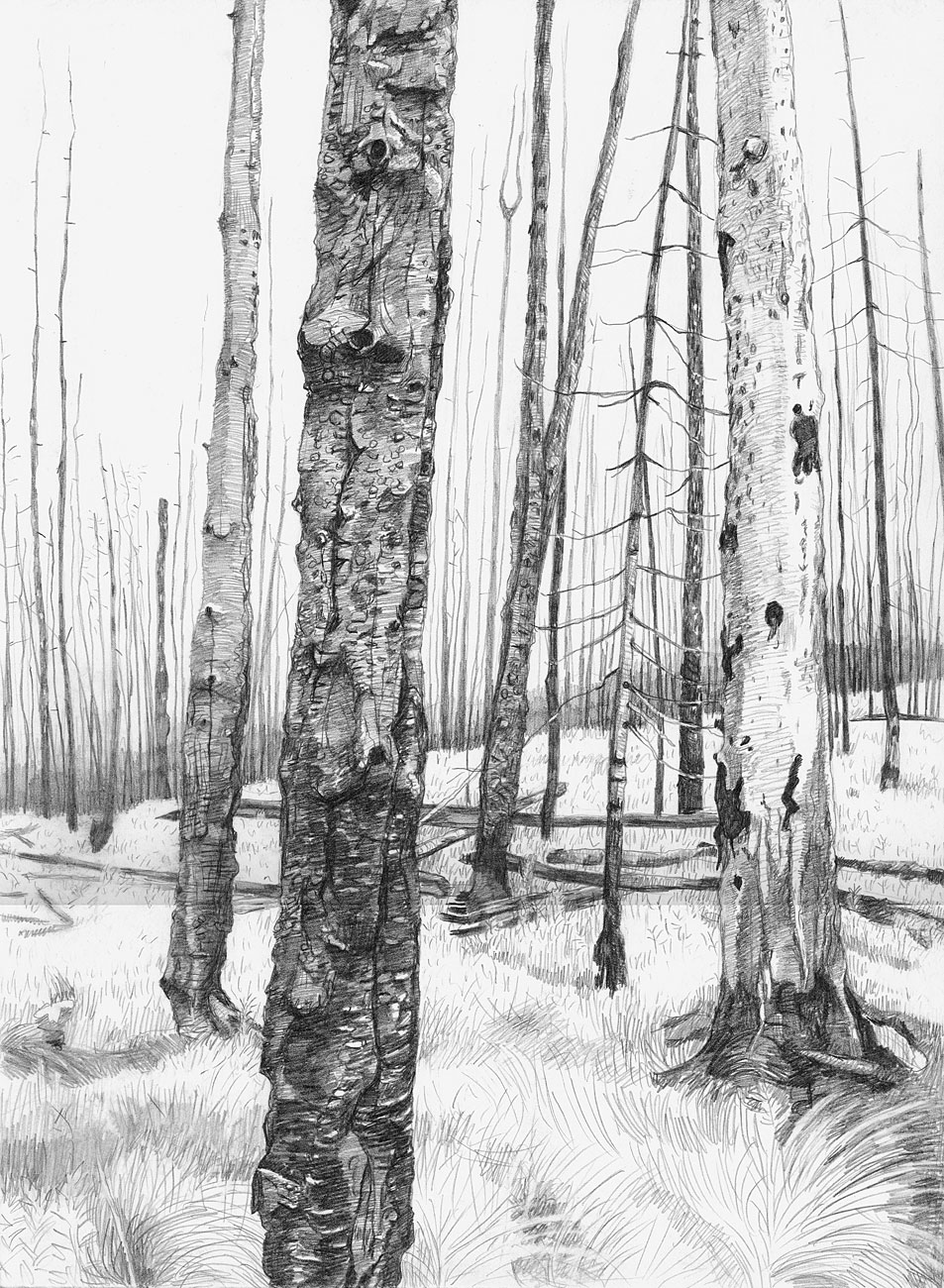 Burn Forest (1)