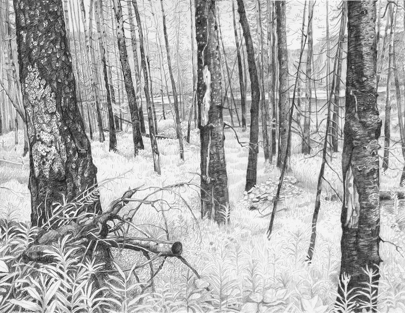 Burn Forest (2)