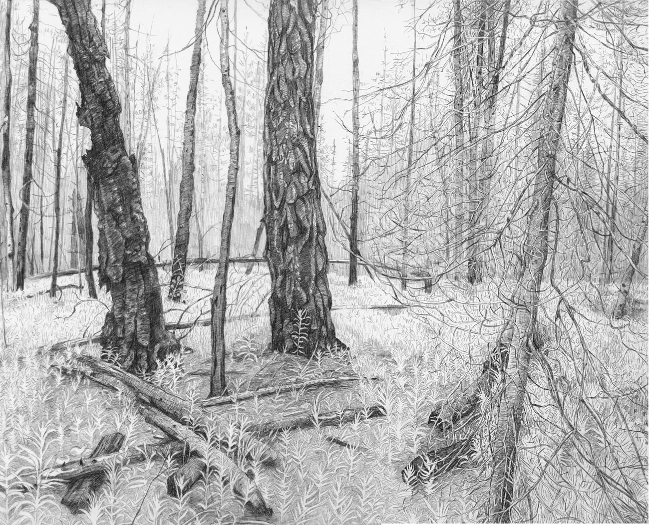 Burn Forest (3)