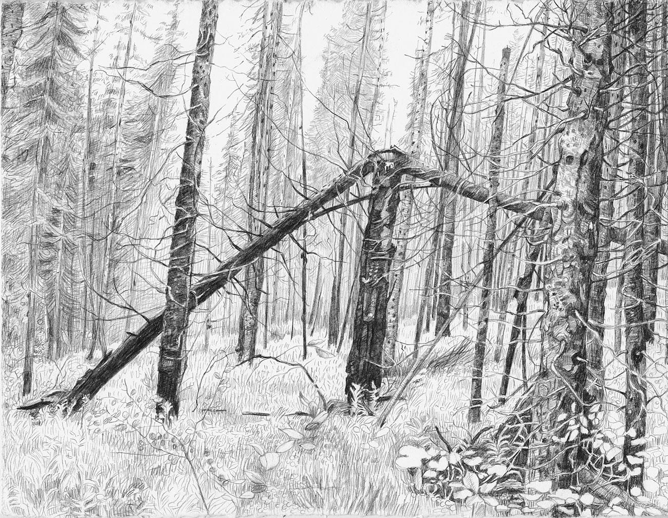 Burn Forest (4)