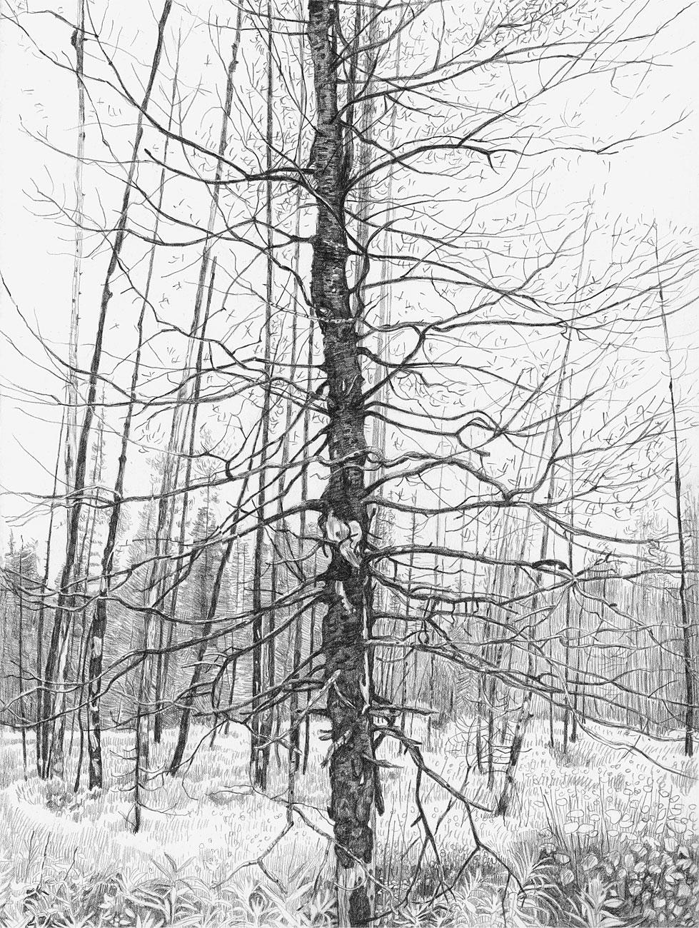 Burn Forest (6)
