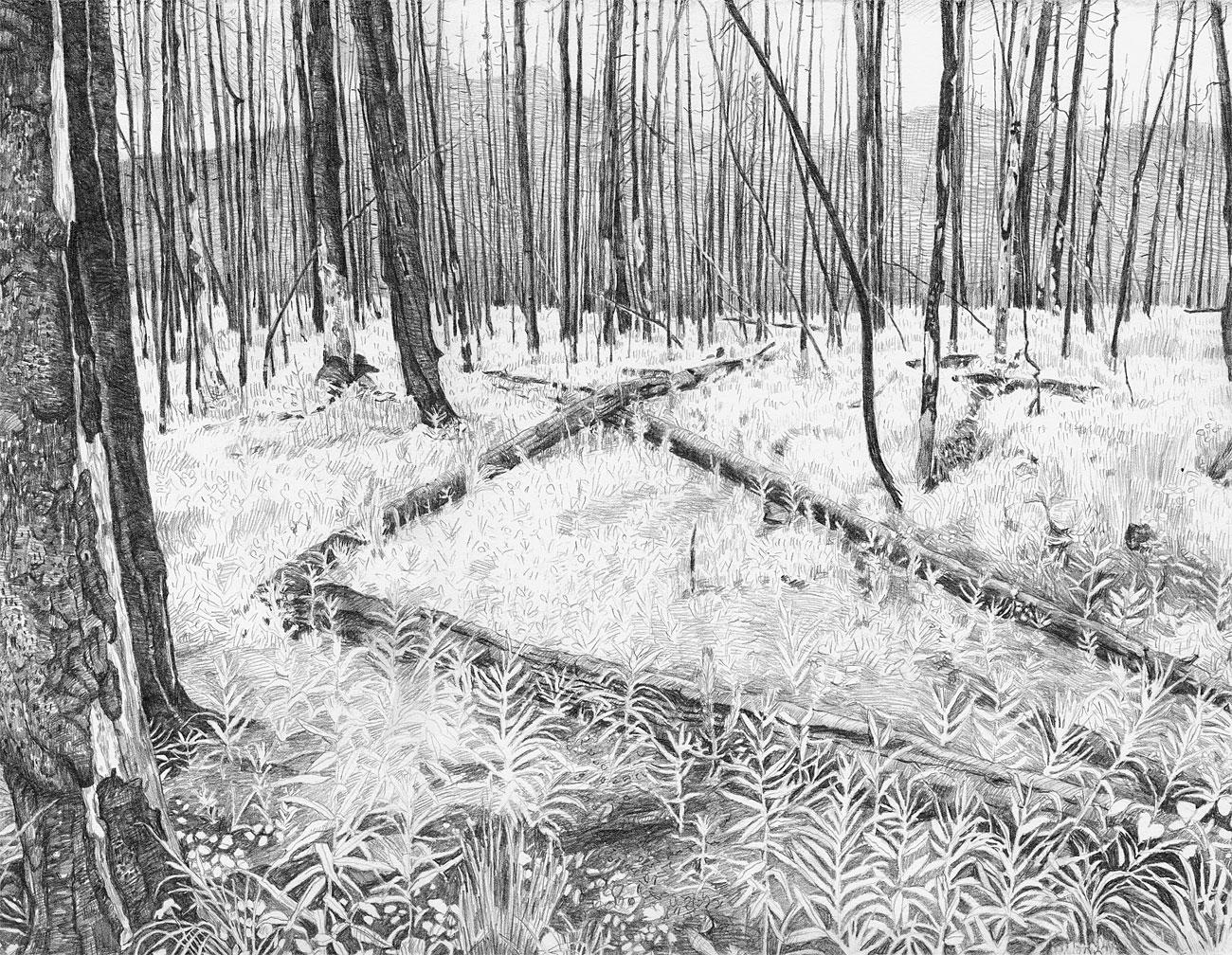 Burn Forest (5)
