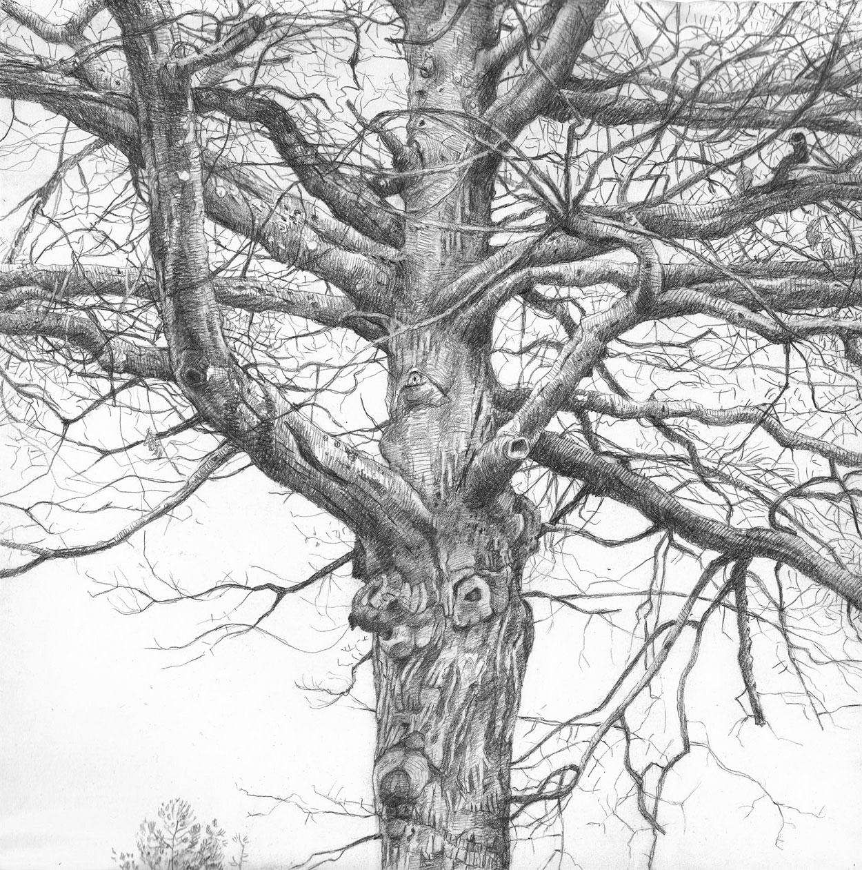Parking Lot Tree (1)