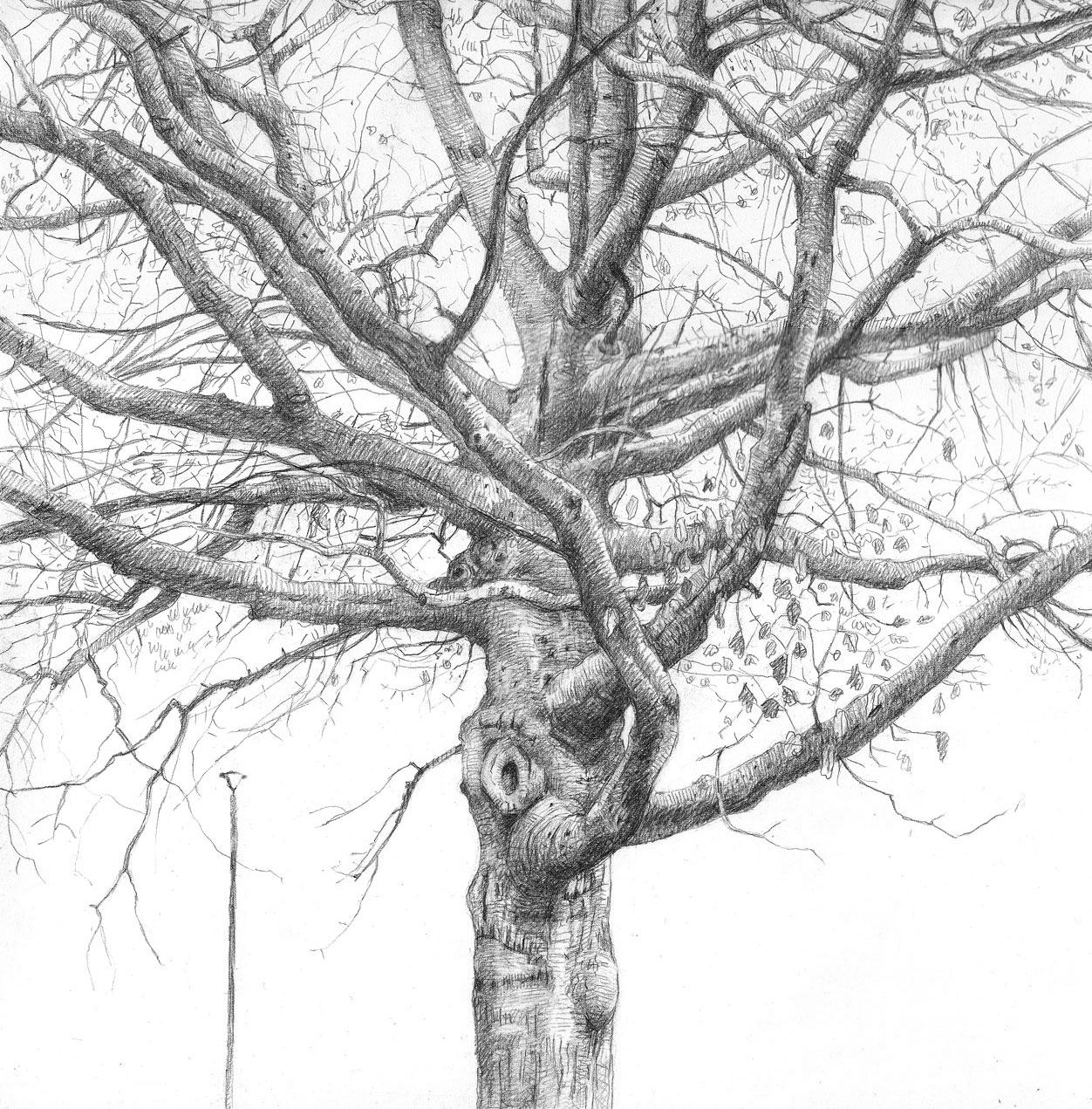 Parking Lot Tree (3)