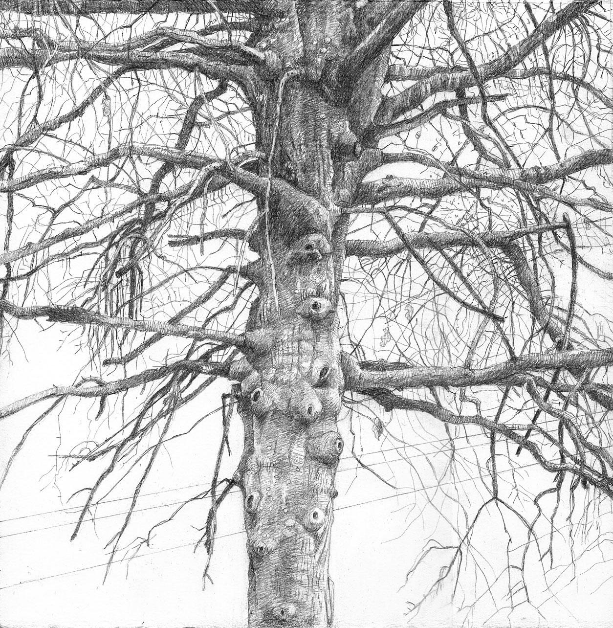 Parking Lot Tree (2)