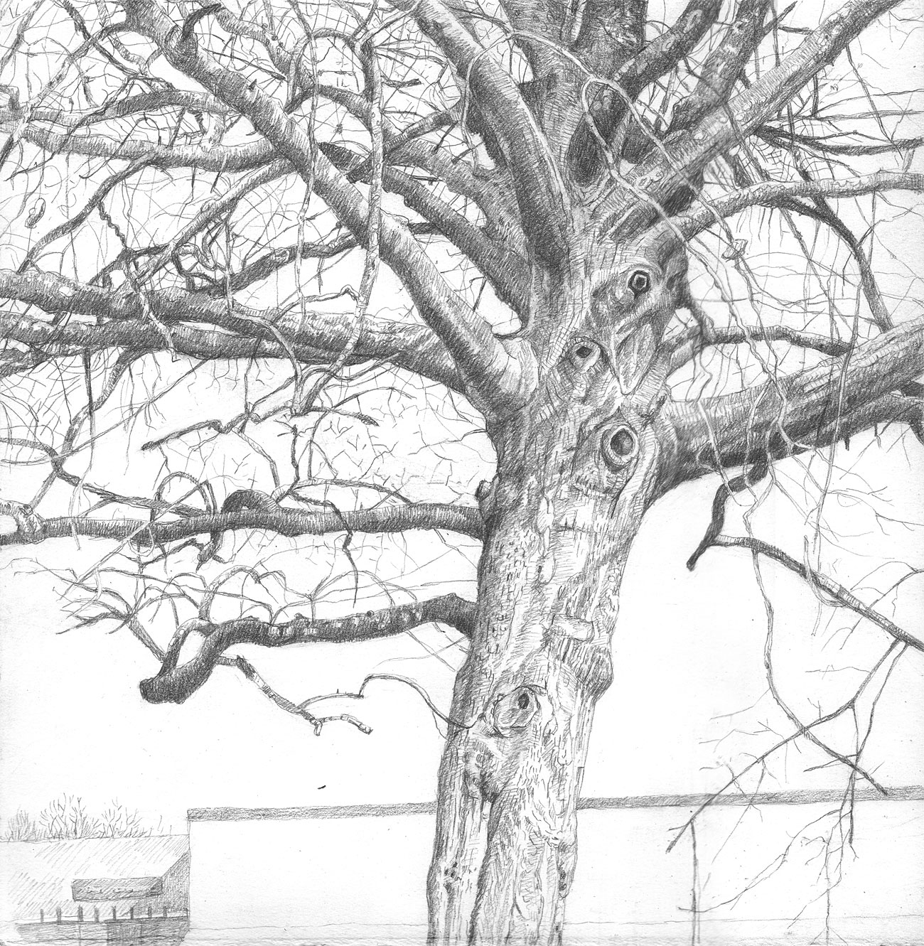Parking Lot Tree (4)