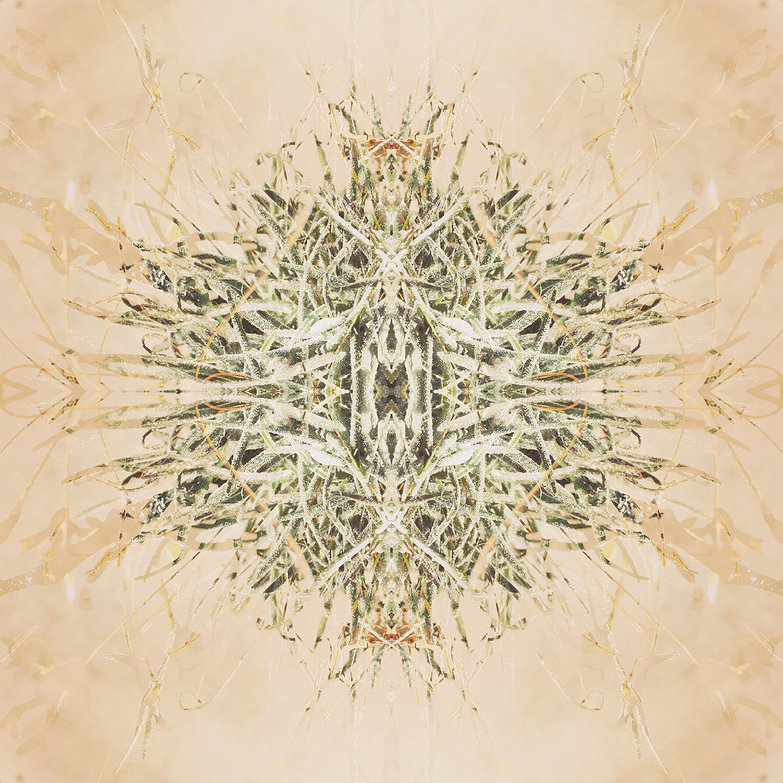 Ball Moss | Reflection 4