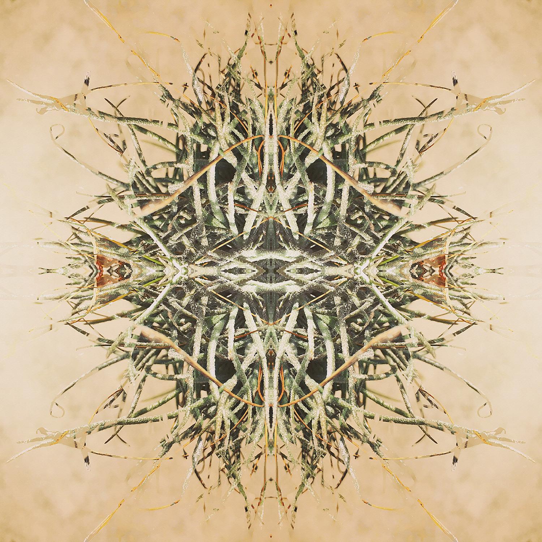 Ball Moss | Reflection 3