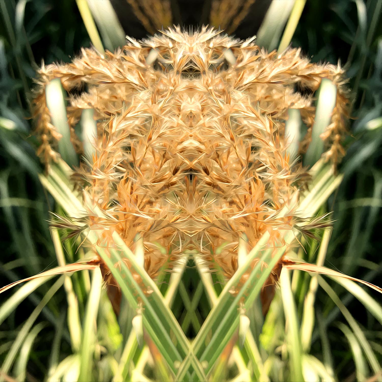 Maiden Grass | Victory