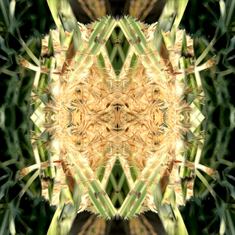 Maiden Grass | Bamboo