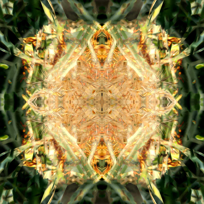 Maiden Grass | Golden Tips