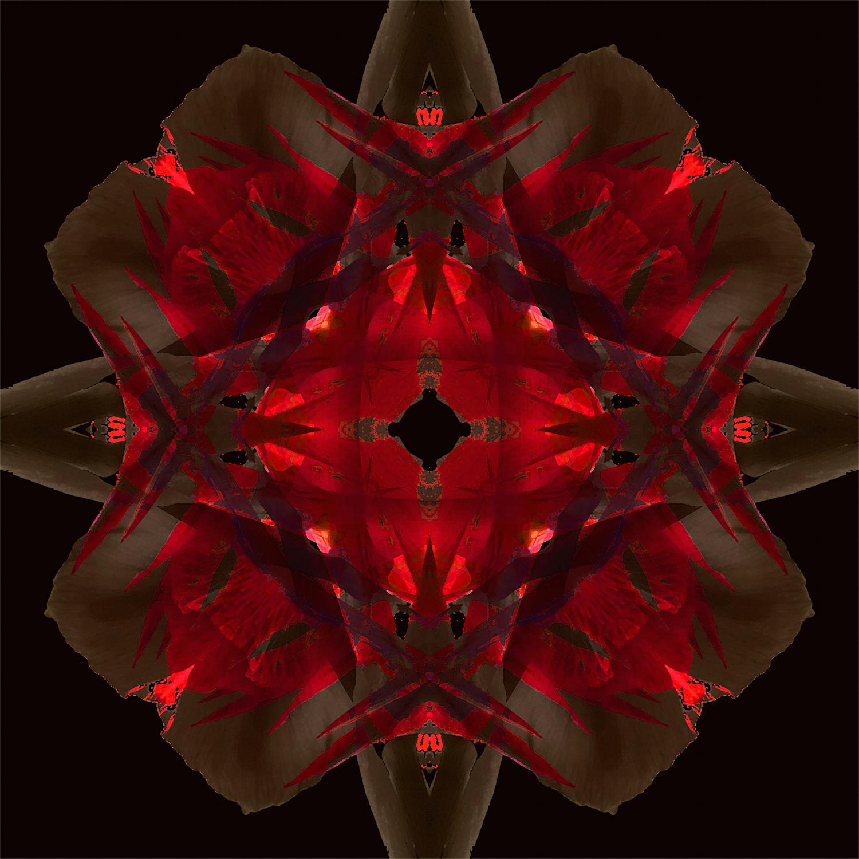 Red Canna   Cherry Cola 1500.jpg