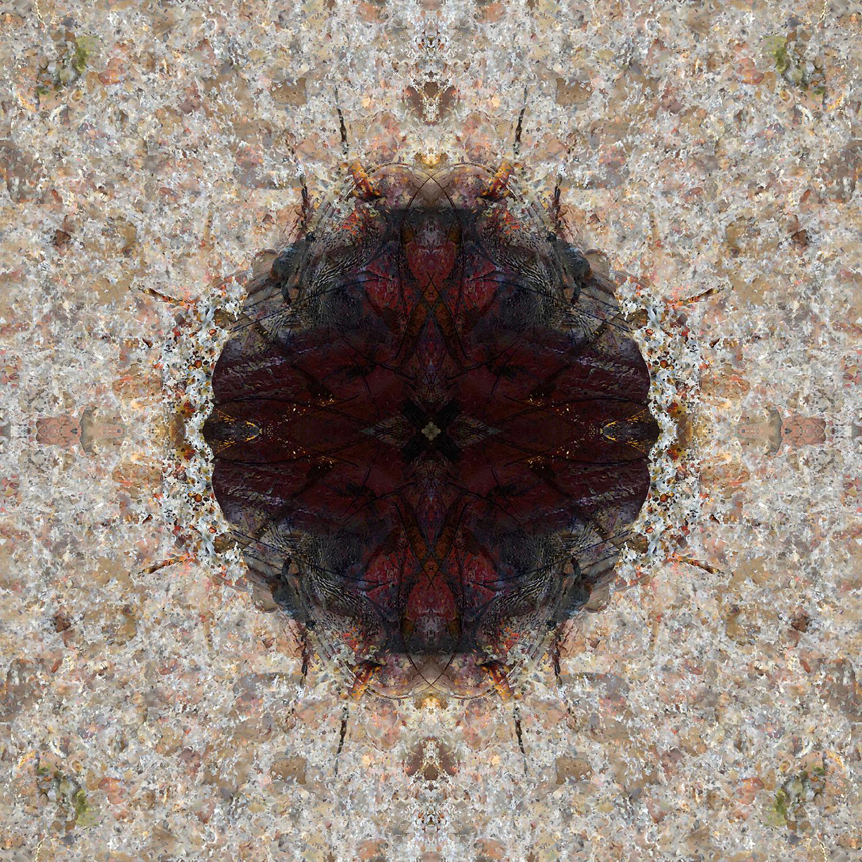 Ox Beetle | Emergence