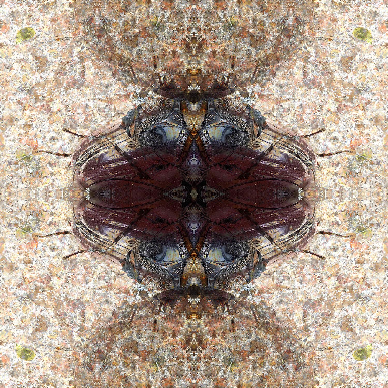 Ox Beetle | Stacked