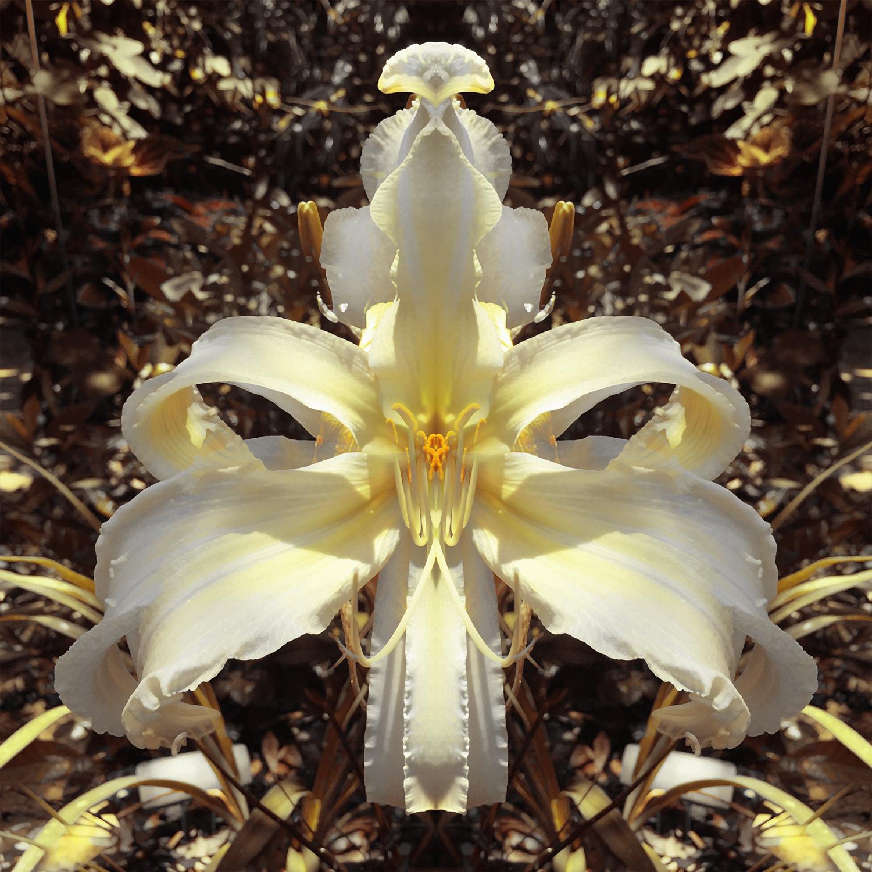 Lillian's White Lies   Garden Goddess 1500.jpg