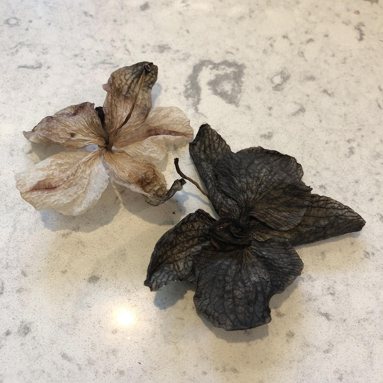 Fallen Orchid Blossoms | Original Photo