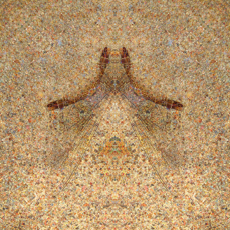 Dragonfly | Steeple 1500.jpg
