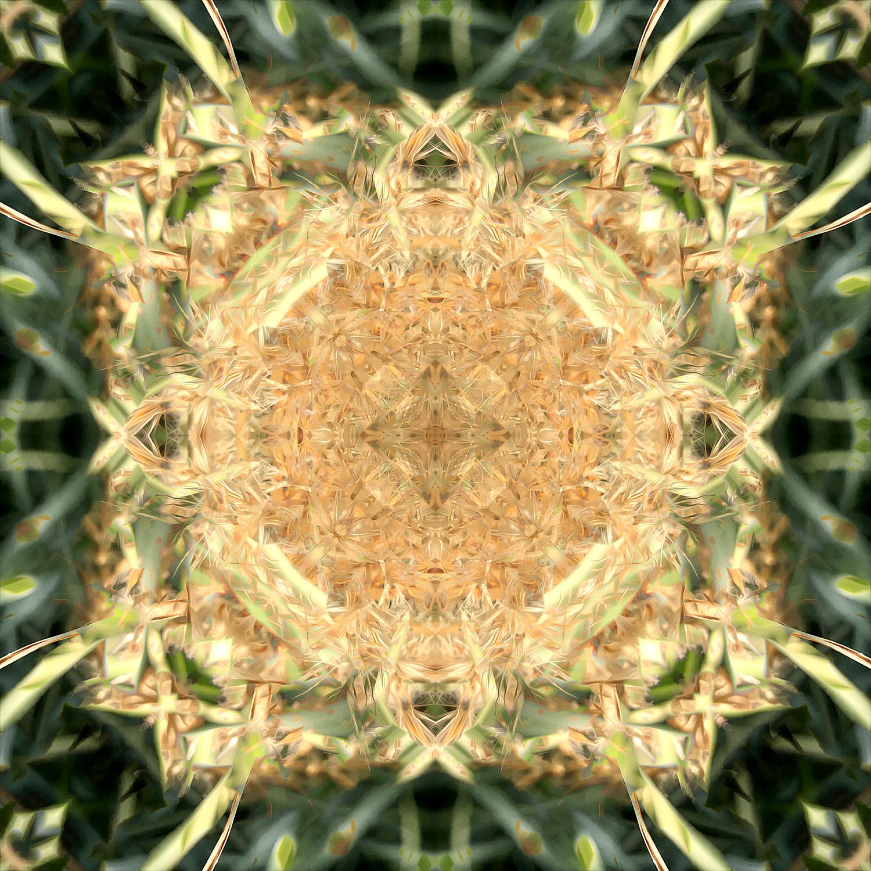 Maiden Grass | Game Board