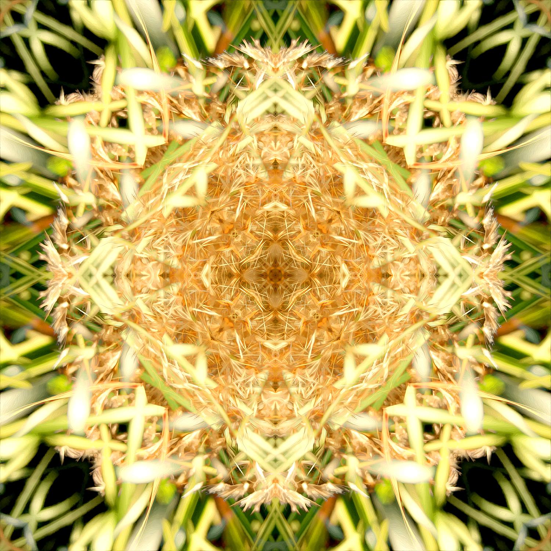 Maiden Grass | Elaborate