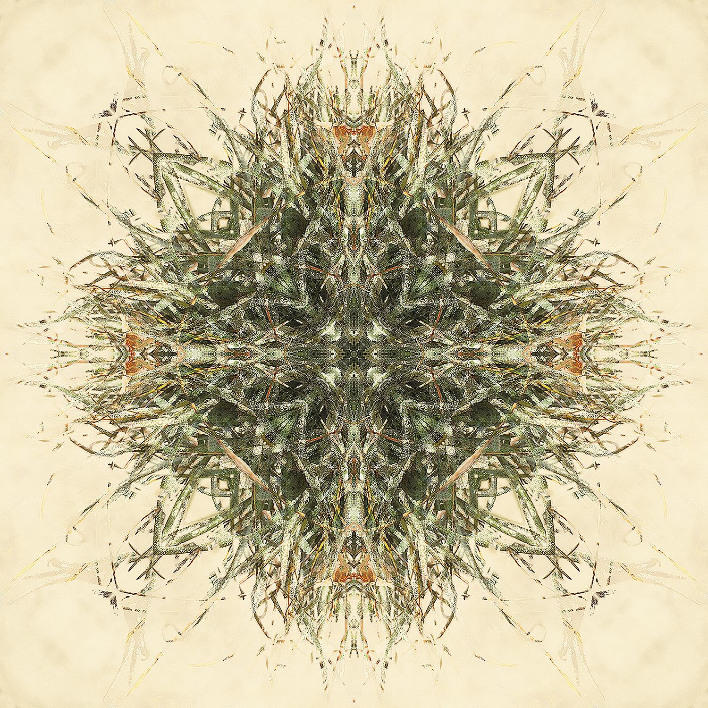 Ball Moss 3 | Complexities 1500.jpg