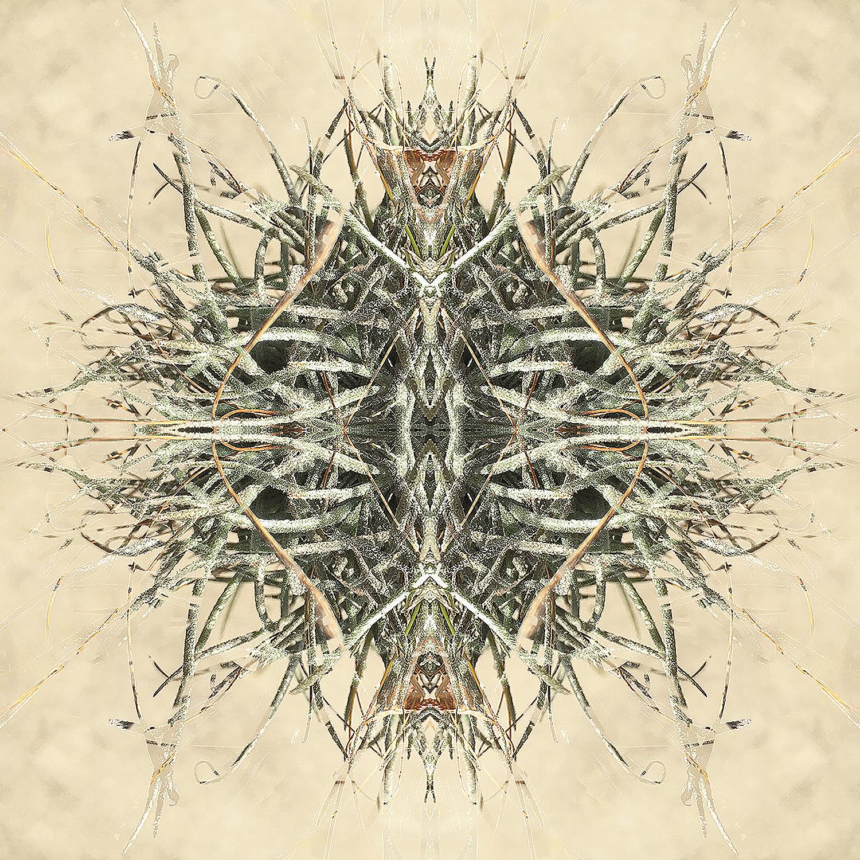 Ball Moss 3 | Alien Insects 1500.jpg