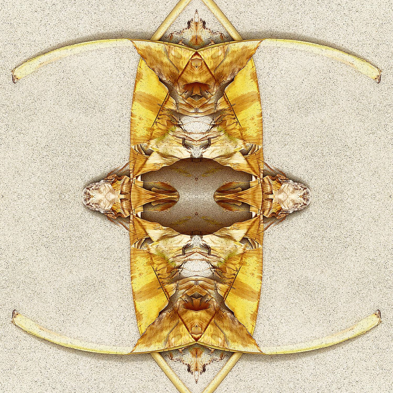 Banana Leaves | Long Horns