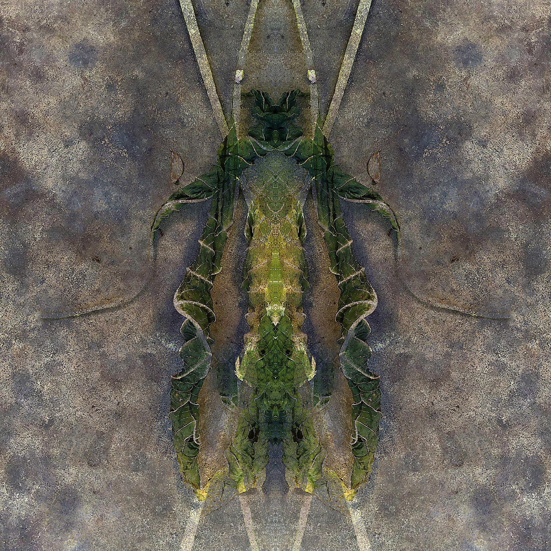 Brugs Leaves | Stilts 1500.jpg