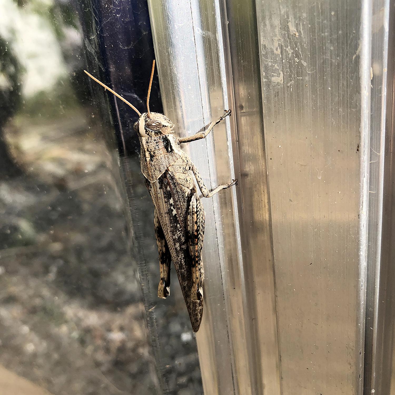 Grasshopper | Original Photo