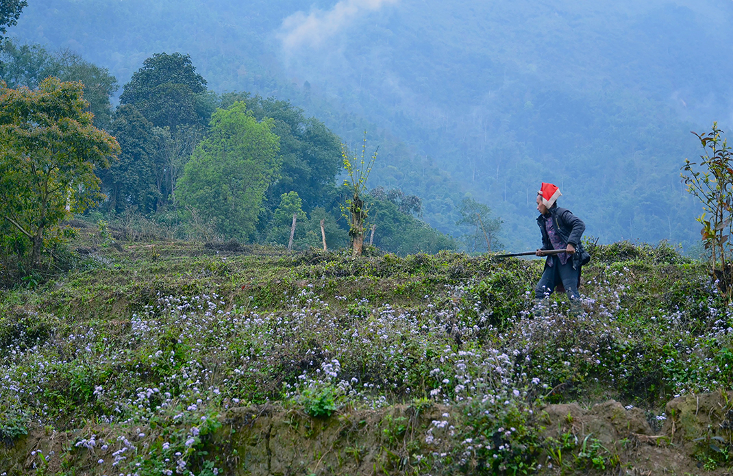Sapa #4, Vietnam 2011