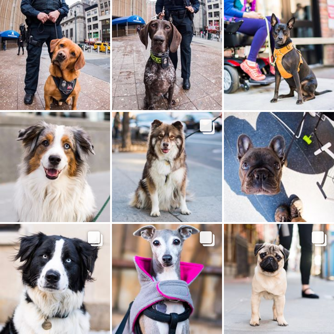 3TheDogist.png