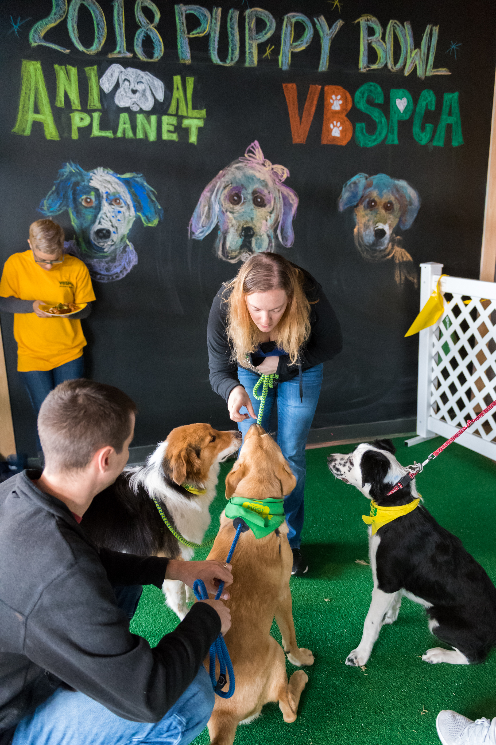 Alicia Gabrelcik gives a snacks to Macchiato, now named Bentley, Queen Sheba, now named Margo, and Bear at the Virginia Beach SPCA 2018 Puppy Bowl Tailgate Party held at Smartmouth Pilot House Sunday, February 4, 2018. All three pups participated in the 14th annual Animal Planet Puppy Bowl.