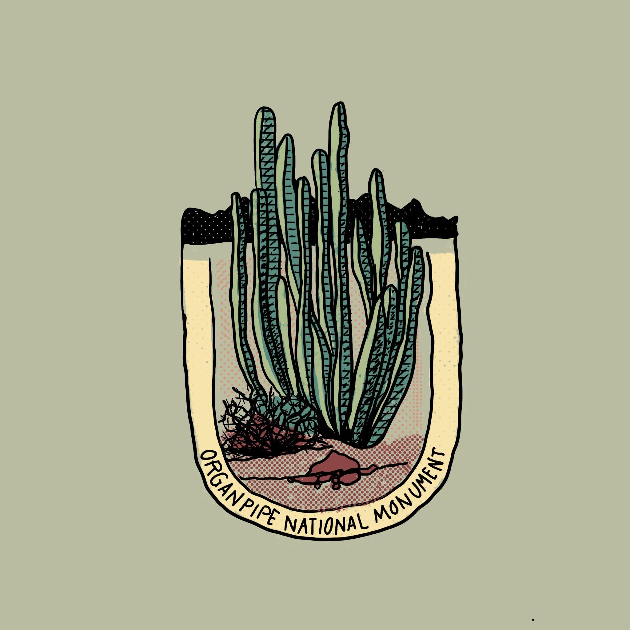 Cactus_Series_-_06.jpg