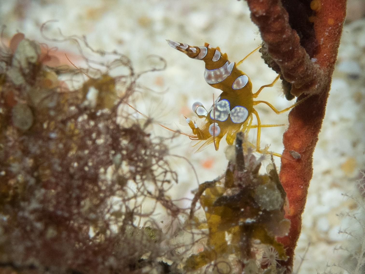squat shrimp 3.jpg