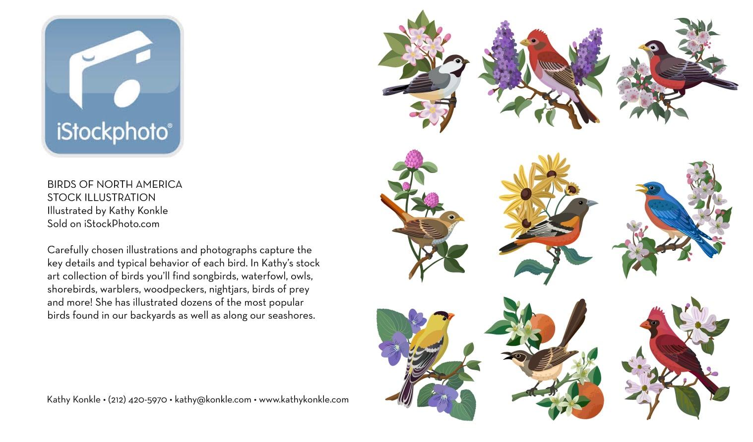 Istock-Birds.jpg