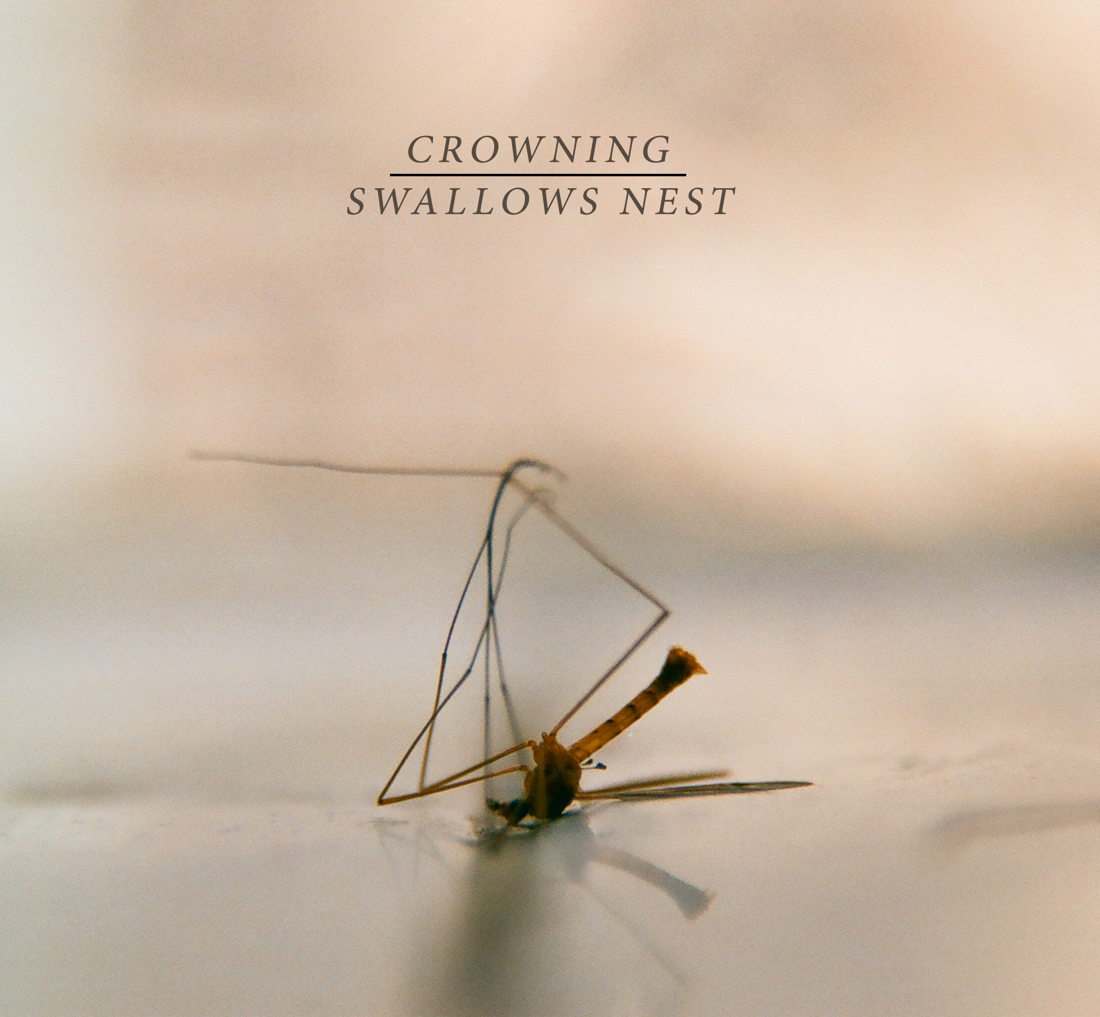"Crowning / Swallows Nest - split 7"" - $5"