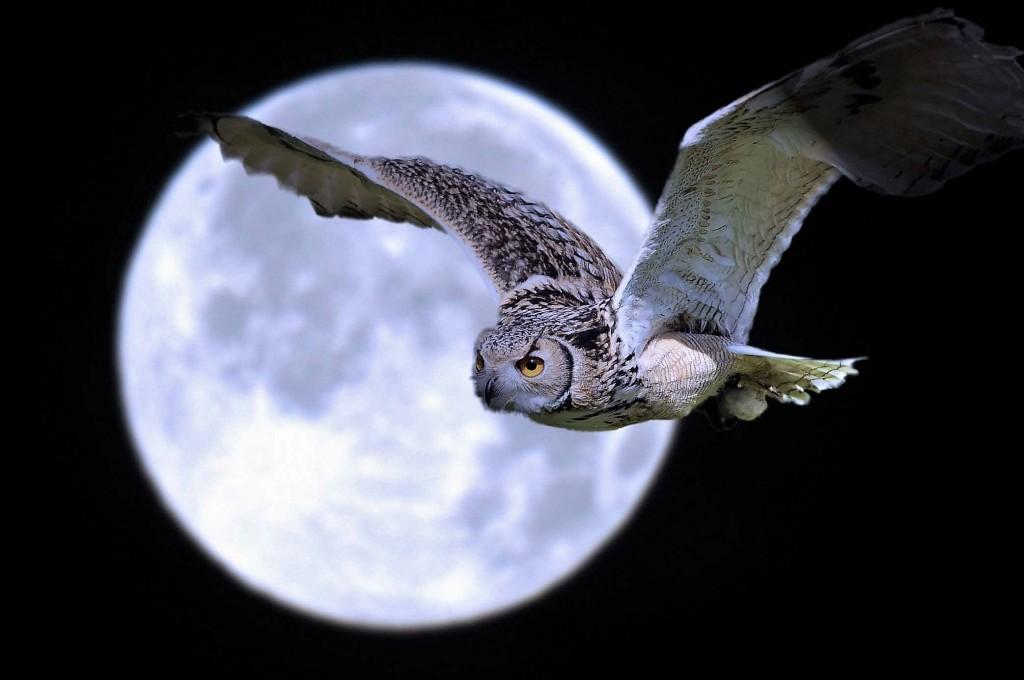 owl moon.jpg