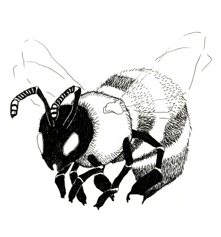 lavenderbee.jpg